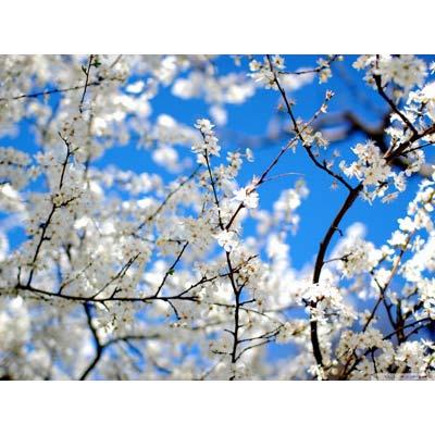 Солнце весной